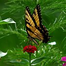 Swallowtail Butterfly by swaby
