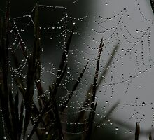 A Web And Morning Dew! by swaby