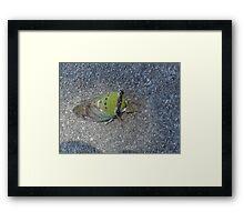 Sick Cicada Framed Print