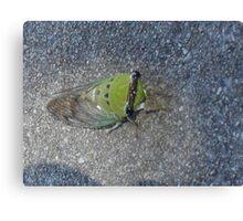 Sick Cicada Canvas Print
