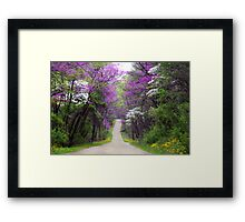 Redbuds in Bloom Framed Print