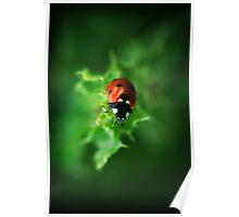 Ultra Electro Magnetic Single Ladybug Poster