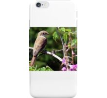 archive red-backed shrike (Lanius collurio) iPhone Case/Skin