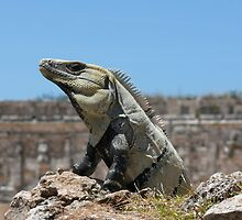 Iguana, among the ancient stones of Uxmal, Mexico by krista121