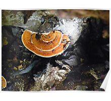 Shelf Fungus Poster