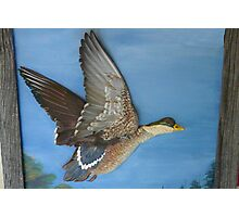 Painted Sculpture, Duck Photographic Print