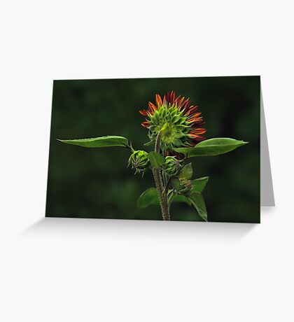 The Other Face - Sunflower Greeting Card