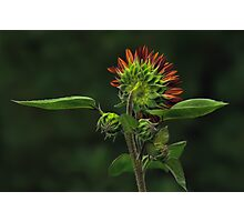 The Other Face - Sunflower Photographic Print