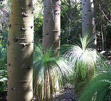 Botanical gardens gladstone by geoffro13