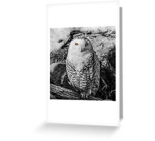 Snowy owl with stunning eyes Greeting Card
