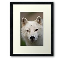 Steely eyed Stare Framed Print