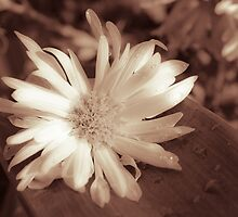 monocrome flower  by th12