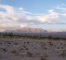 The beauty of the Desert by Missy Yoder