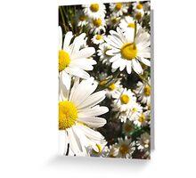 Daisy iPhone & Samsung Phone Case Greeting Card