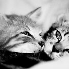 Sweet kisses by Erica Sprouse