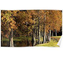 Cypress Pond Poster
