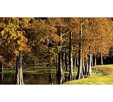 Cypress Pond Photographic Print