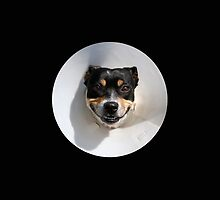 Smiling dog wearing a cone by steveball