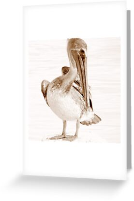 Young Pelican by AuntDot