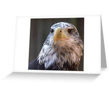 Adler II Greeting Card
