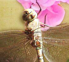 ~ Dragon Fly 2 ~ by Brenda Boisvert