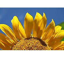 Reach For The Sun Photographic Print