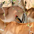 RED-BILLED OXPECKER AND THE IMPALA -A combination of Textures by Magaret Meintjes