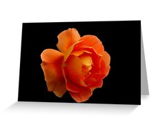 FLAME ORANGE ROSE Greeting Card