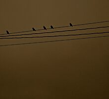 sitting on a wire by stephotography