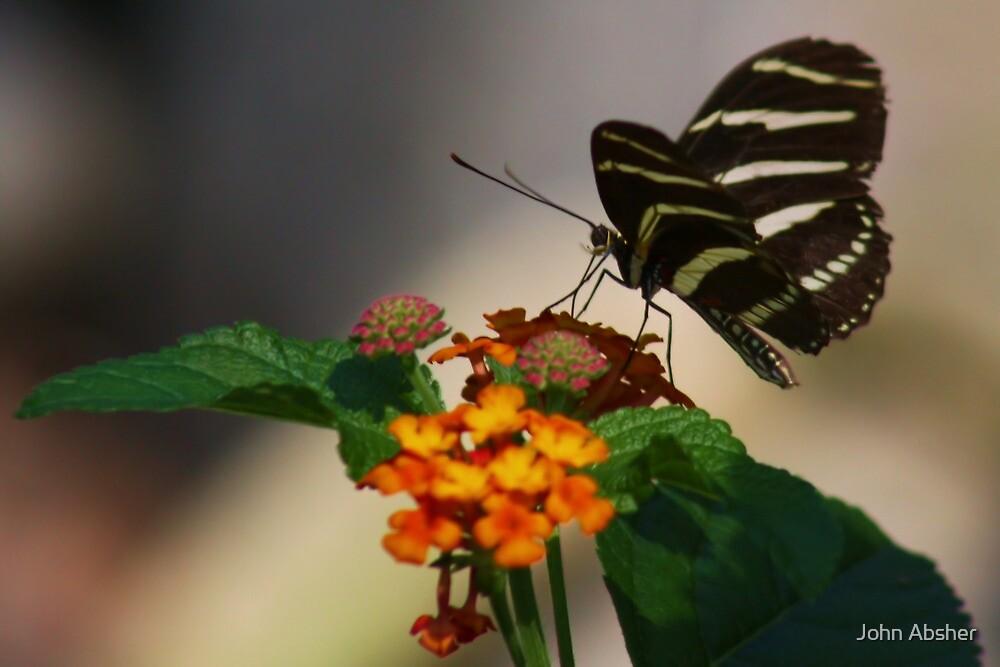 Zebra Longwing Butterfly Profile by John Absher
