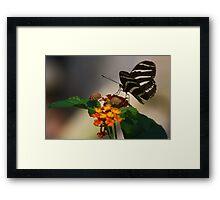 Zebra Longwing Butterfly Profile Framed Print