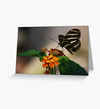 Zebra Longwing Butterfly Profile Greeting Card