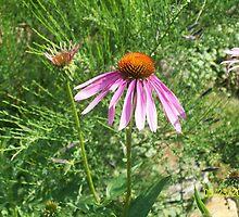 flower 2 by joannadehart