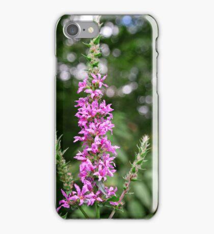 Purple Loosestrife (Lythrum salicaria) iPhone Case/Skin