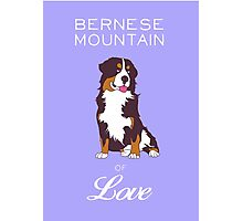 BERNESE MOUNTAIN DOG Poster Photographic Print