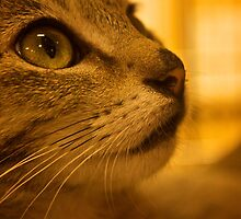 bright eyes by stephotography