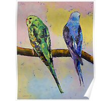 Green and Violet Budgies Poster