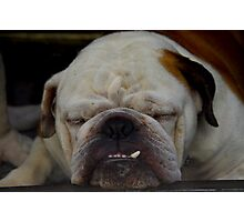 Sleeping dog Photographic Print