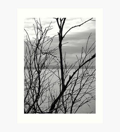 Branches Bare! Art Print