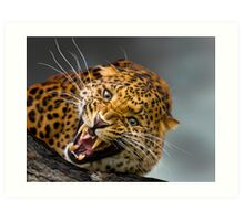 I don't think that you should come any closer!! Art Print