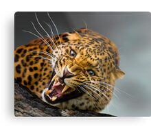 I don't think that you should come any closer!! Metal Print