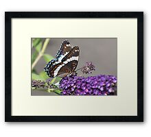 Butterfly Flower With Guest Framed Print