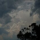 Skies Brood Over Monaro Trees  by nonny