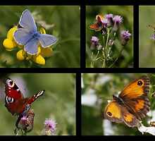 Butterfly Collage by AnnDixon