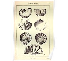 A Handbook Of Ornament With Three Hundred Plates Franz Sales Meyer 1896 0107 Natural Forms Shell Poster
