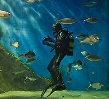 aquarium..... by wendys-designs
