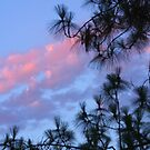 Sunset Through the Pines by Heather Friedman