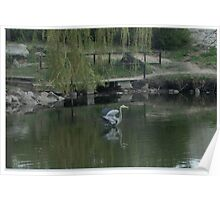 Blue Herron Photography Poster