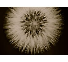 From weeds, beautiful things grow..... Photographic Print