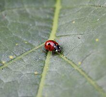 Ladybug by HeloiseDiez